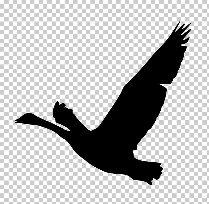 Bird Goose Silhouette Duck , goose PNG clipart.