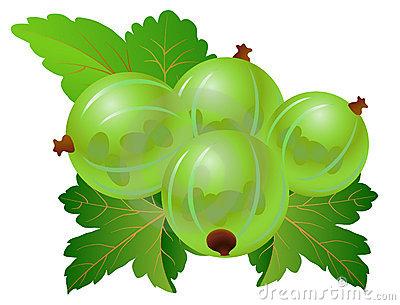 Gooseberry 2c Green Leaves Stock Illustrations.