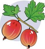Stock Illustrations of gooseberries akr0040.