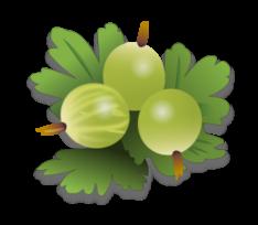 Gooseberry clip art Free Vector.