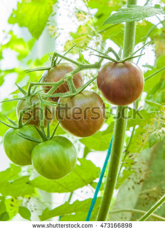 Small Greenhouse Stock Photos, Royalty.