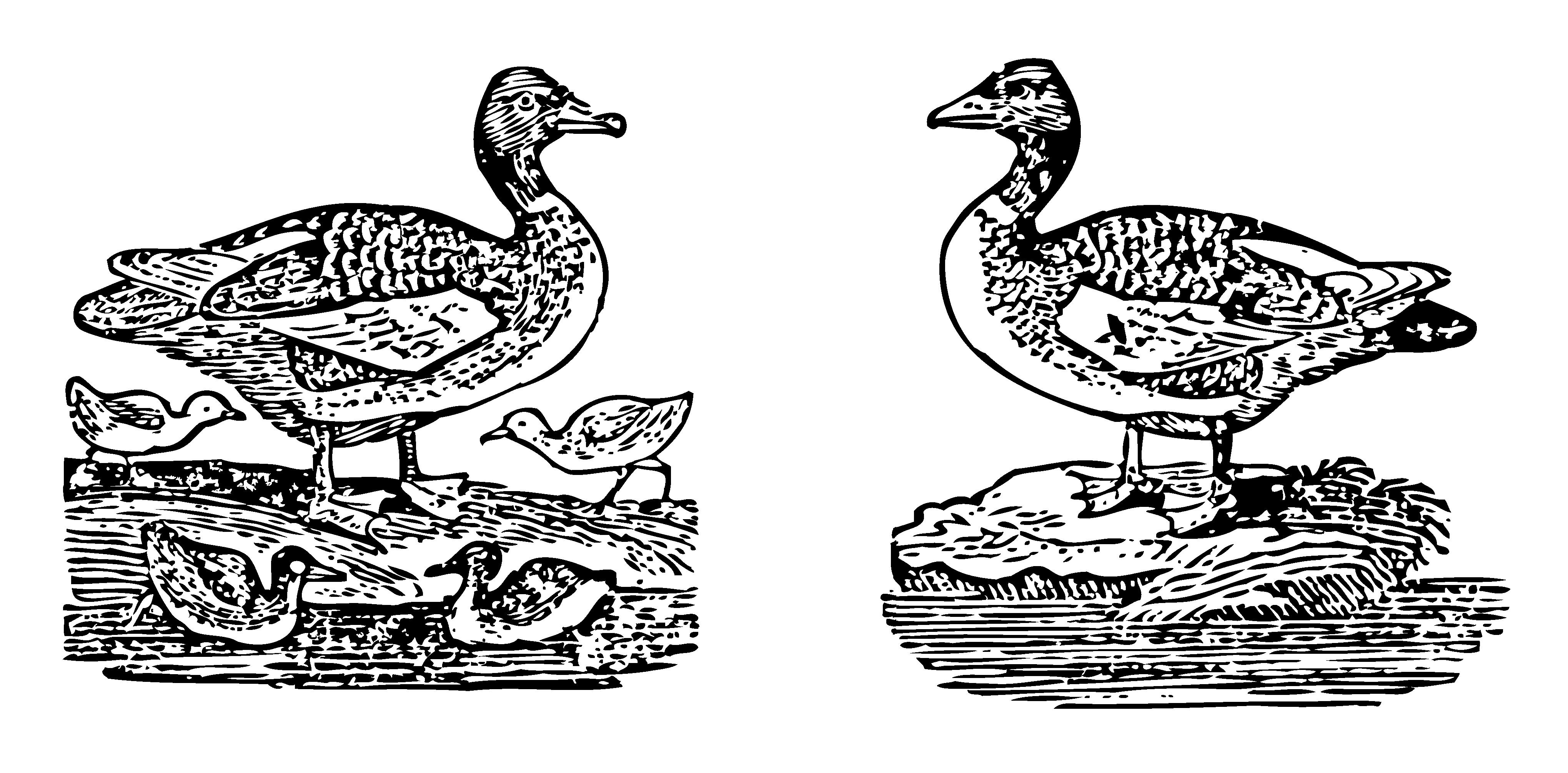 Mother Goose Melodies Goosey Gander.