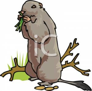 Gopher Clipart Picture.