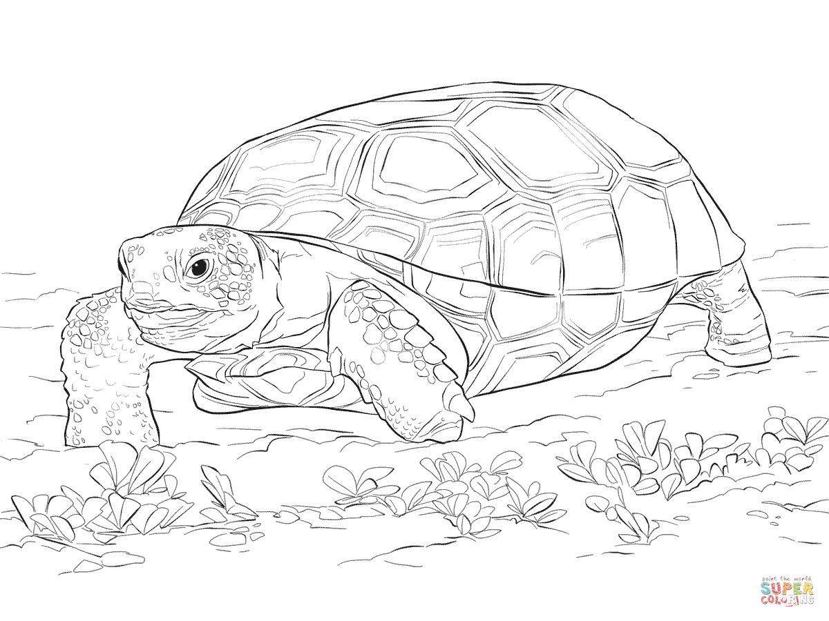 Gopher Tortoise Clipart.