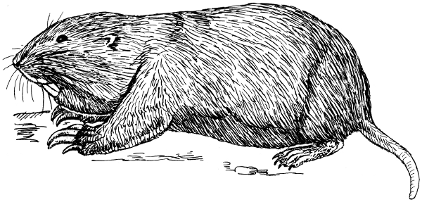 Gopher Clip Art Download.