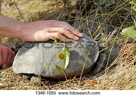 Stock Image of Boy touching the shell of a Gopher Tortoise.