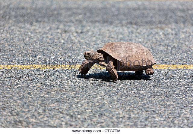 Tortois Stock Photos & Tortois Stock Images.