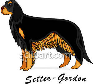 Gordon Setter Clip Art.