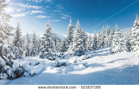 Winter Trees Stock Images, Royalty.