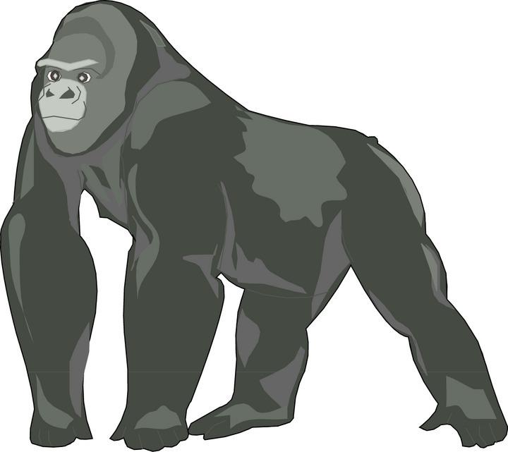 Clipart gorilla 3 » Clipart Station.