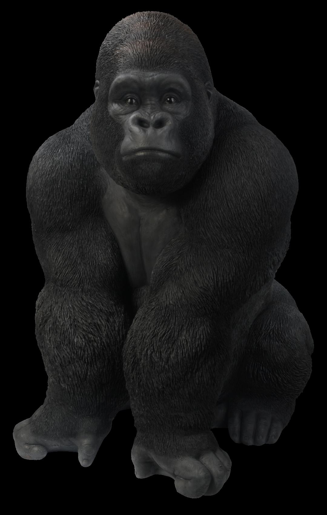 Gorilla PNG images free download, gorillas PNG.