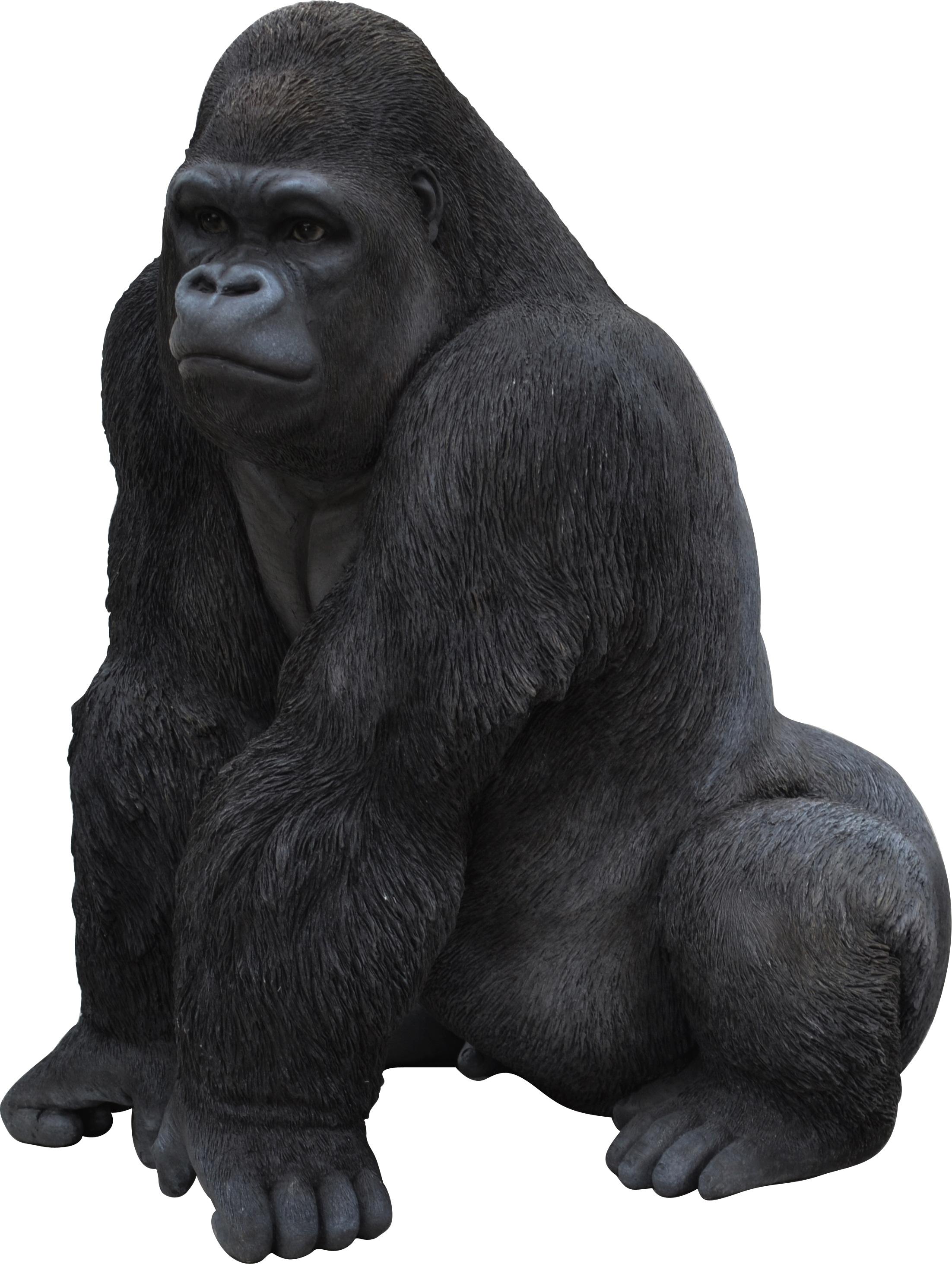 Gorilla PNG Transparent #37857.