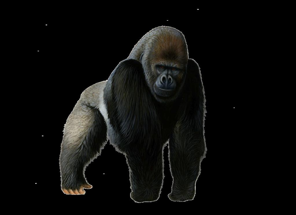 Download Gorilla PNG Pic.