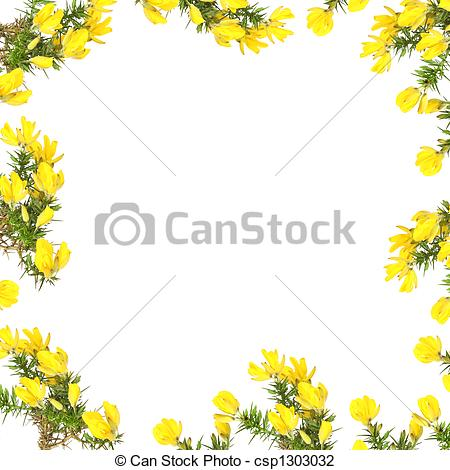 Clip Art of Gorse Flower Beauty.