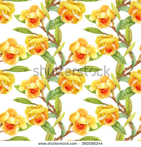 Gorse Plant Stock Photos, Images, & Pictures.