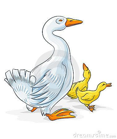 Gosling Stock Illustrations.