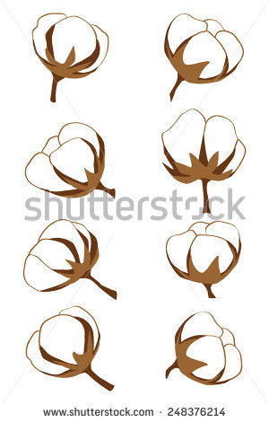 Gossypium Plant Stock Photos, Royalty.
