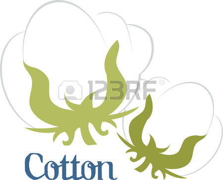 82 Gossypium Stock Vector Illustration And Royalty Free Gossypium.