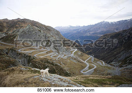 Stock Images of A Portuguese Waterdog standing on the Gotthard.