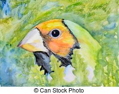 Gouldian Stock Illustrations. 8 Gouldian clip art images and.