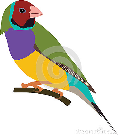 Gouldian Stock Illustrations.