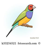 Gouldian finch Clip Art and Illustration. 6 gouldian finch clipart.