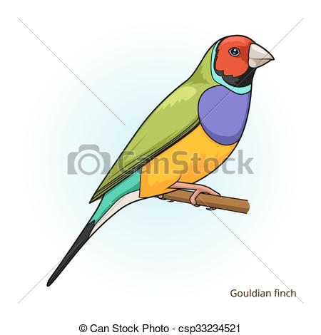 Gouldian Finch Clipart.