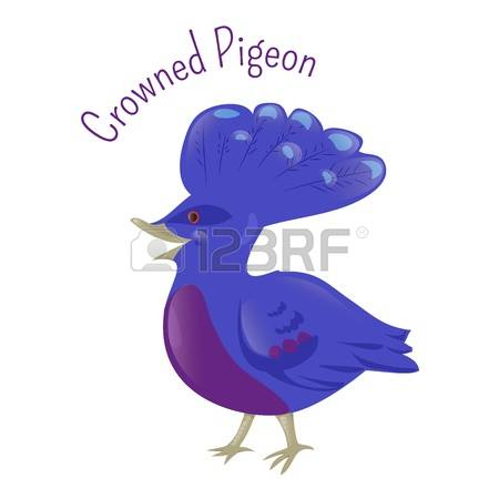 2,328 Pigeon Cartoon Stock Illustrations, Cliparts And Royalty.