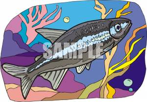 Blue_Gourami_Royalty_Free_Clipart_Picture_090810.