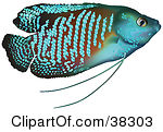 Royalty Free Fish Illustrations by dero Page 1.