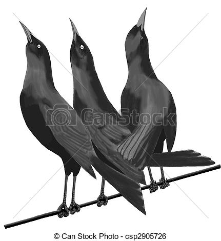 Stock Illustration of Common Grackle.