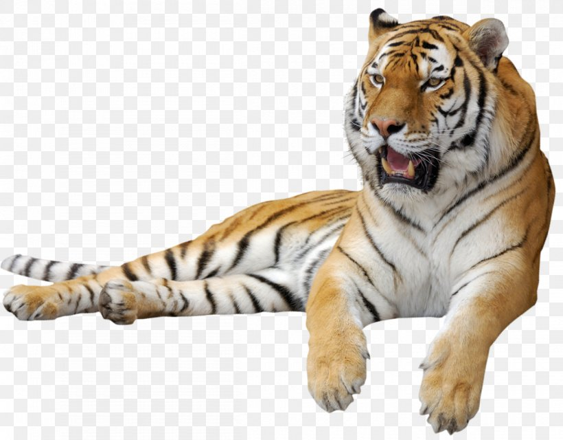 Siberian Tiger Clip Art, PNG, 1200x938px, Tiger, Big Cat.