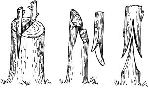 Tree graft clipart.