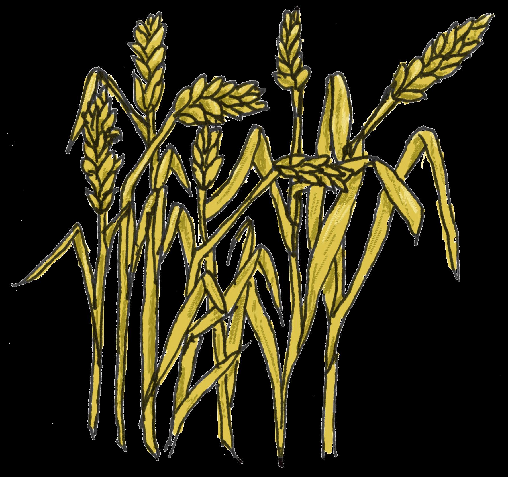 Grain Clipart.