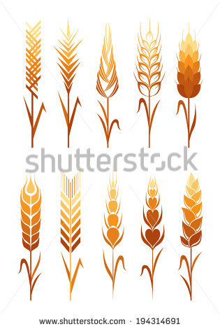 Wheat Grain Isolated Stock Photos, Royalty.