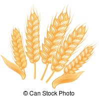 EPS Vectors of Sketch of wheat ears with ripe grains.