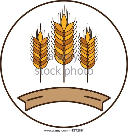 Grain Cereal Vector Stock Photos & Grain Cereal Vector Stock.