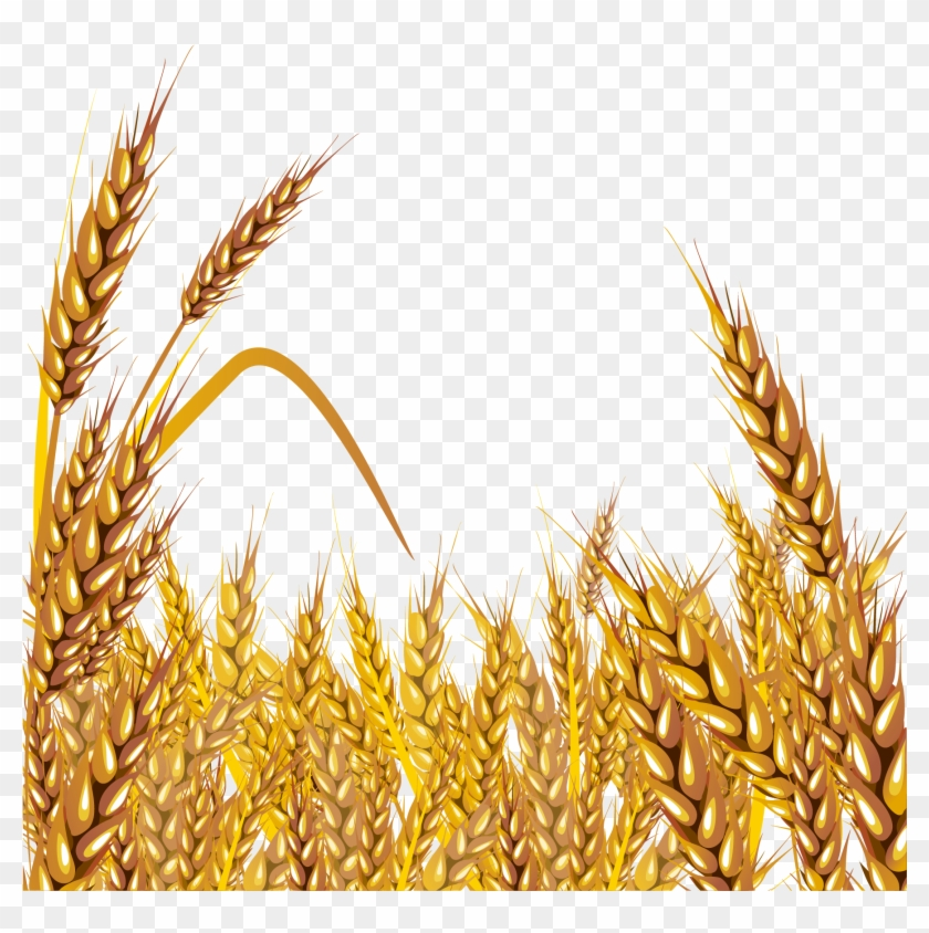 Wheat Euclidean Vector Clip Art.