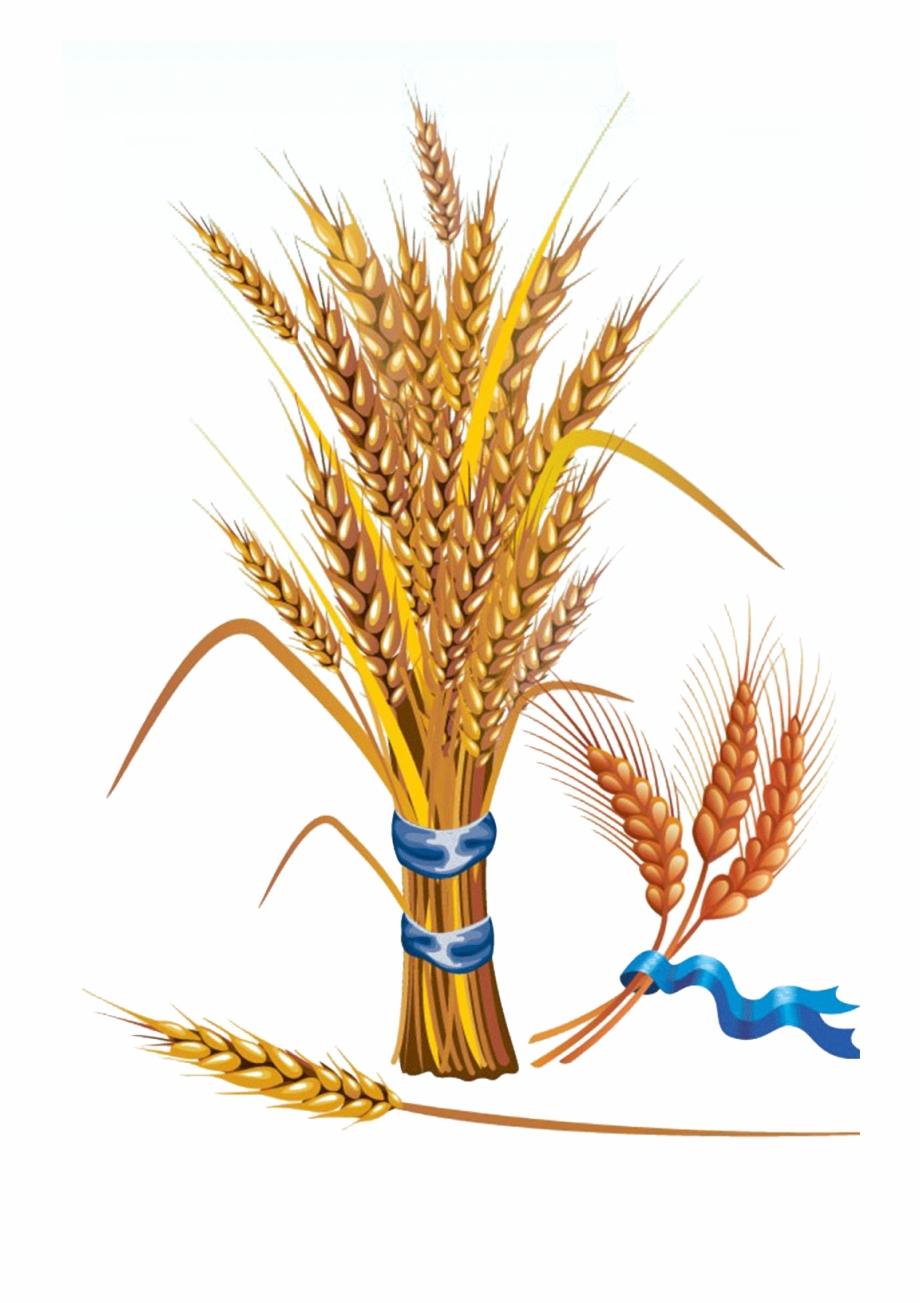 Wheat Euclidean Vector Grain Clip Art.
