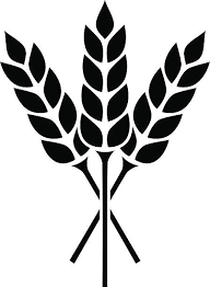 Image result for grain clipart.