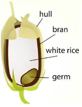 Difference between Rice Bran and Rice Husk.