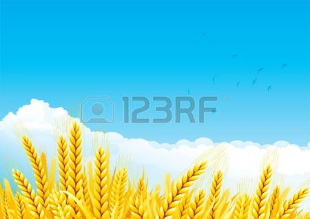 Clip Art Wheat Stock Photos Images. Royalty Free Clip Art Wheat.