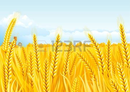 9,660 Grain Fields Cliparts, Stock Vector And Royalty Free Grain.