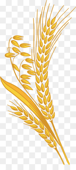 Millet Grain PNG.