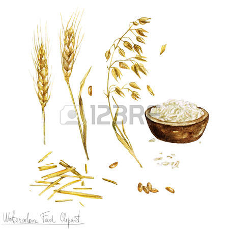 Whole Wheat Grain Stock Photos Images. Royalty Free Whole Wheat.