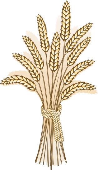 Grain harvest clipart ...