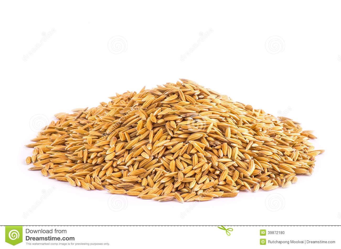 Rice grains clipart 7 » Clipart Station.