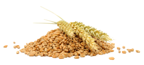 Grain PNG Images Transparent Free Download.