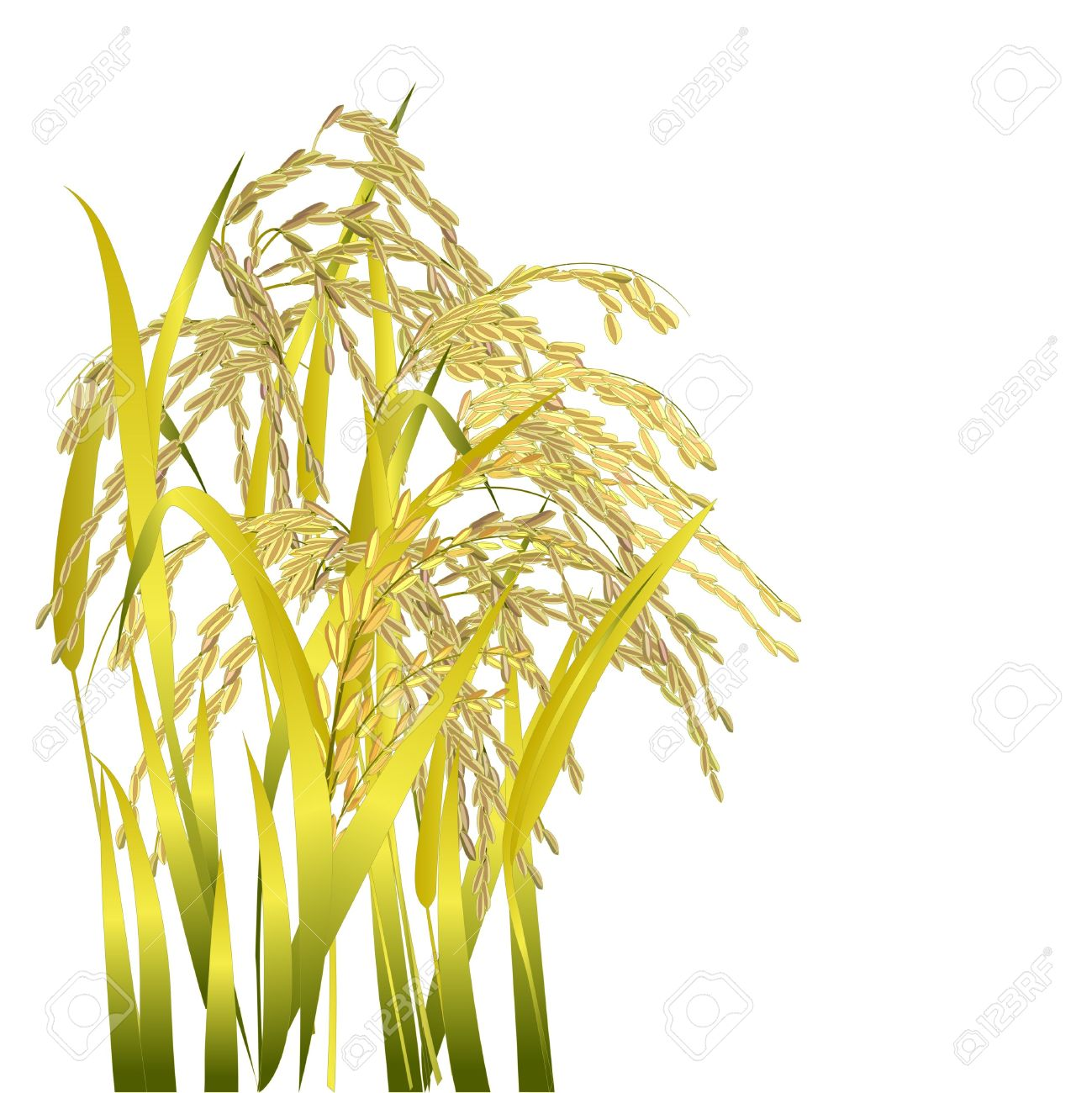 Clipart rice grains.