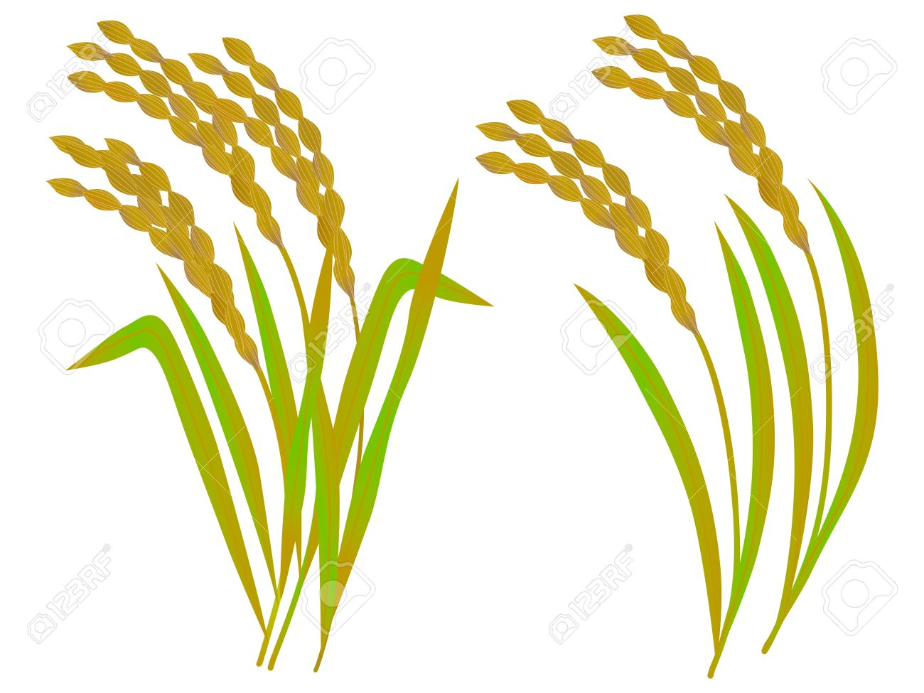 The Illustration Of Rice Royalty Free Cliparts, Vectors, And Stock.